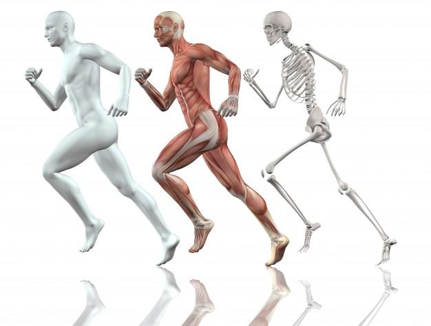 el-cuerpo-humano-corriendo_1048-4903